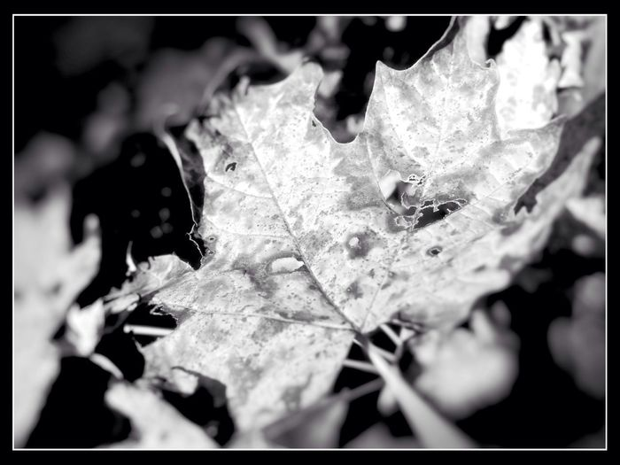 Blackandwhite Nature