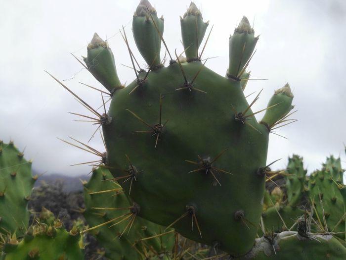 Cactus Danger
