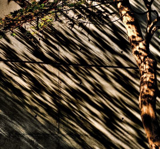 Tree which has Shadow Leaves