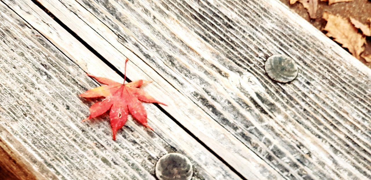 Maple leaf in nikko japan Japan Autumn Nikko Japan Japan Photography Leaf Autumn Red Wood - Material Maple Leaf Close-up