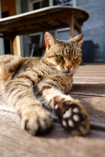 EyeEm Selects Pets Kitten Feline Domestic Cat Sitting Lying Down Relaxation Ginger Cat Whisker Close-up Cat Paw