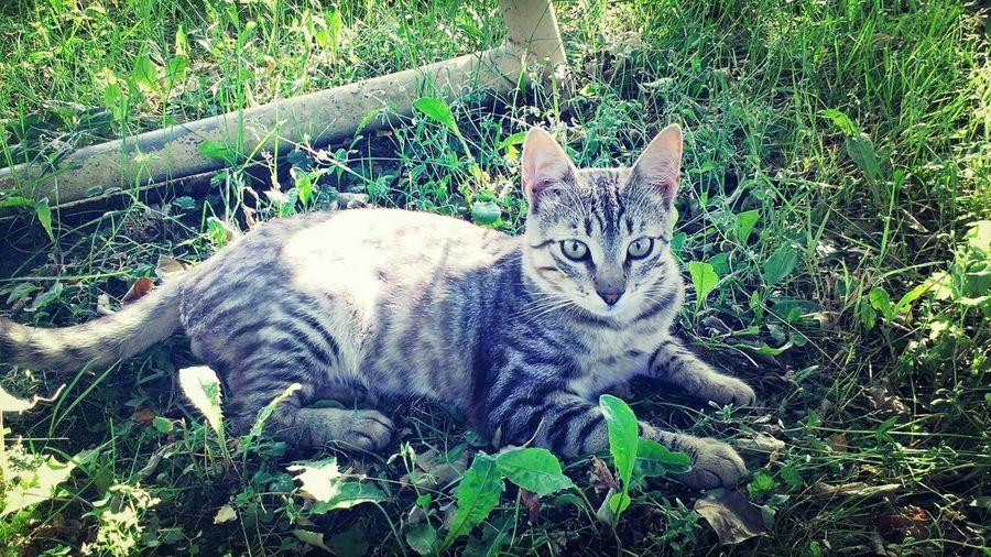 Live Near You Cat♡ Take Photo