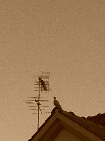 One Pigeon On Roof Sepia Style Grain Sepia Antenna - Aerial Architecture Roof Low Detail Roofed Grain Max Vintage Style