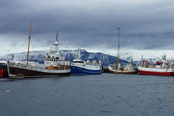 Fishing boats at Husavik, Iceland Travel Photography Traveling Iceland Husavik Fishing Village Fishing Fishing Boats Hello World Icelandair Iceland_collection Visiticeland