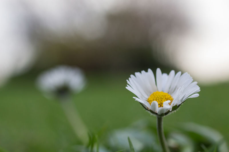 Check This Out Taking Photos Bookeh First Eyeem Photo Capture The Moment Deceptively Simple Germany Naturelovers Nature Photography Beautiful Nature Nature Flowers Blumen Gänseblümchen