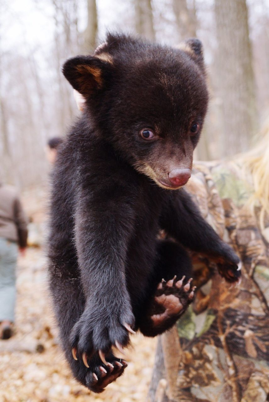 bear, one animal, animal themes, animals in the wild, animal wildlife, mammal, no people, focus on foreground, close-up, outdoors, day, nature, tree
