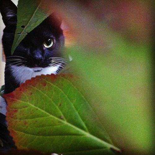 Cat Cats Catlovers Catoftheday Catsofworld Catsofinstagram Cats_of_instagram Catstagram Instacats Instalove Kitty Kitten Katze Katzen Katzenliebe Katzenfoto Gatto BLackCat Ilovecats Petstagram Pawstagram Pirata