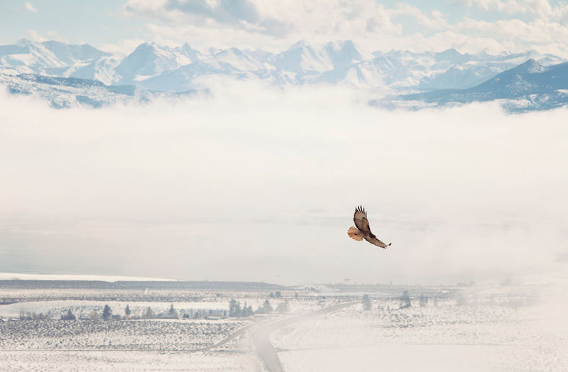 Bird flying over landscape against sky during winter