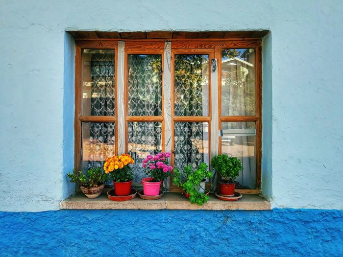 Window Flower House No People Nature Built Structure Window Box Architecture Multi Colored EyeEmNewHere Colour Your Horizn