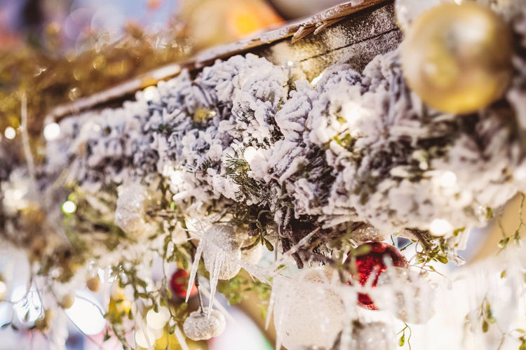 Flower Selective Focus No People Plant Flowering Plant Close-up Decoration Freshness Celebration Indoors  Still Life Nature Christmas Day White Color Holiday Retail  Vulnerability  Christmas Decoration Christmas Ornament Snow Christmas Lights