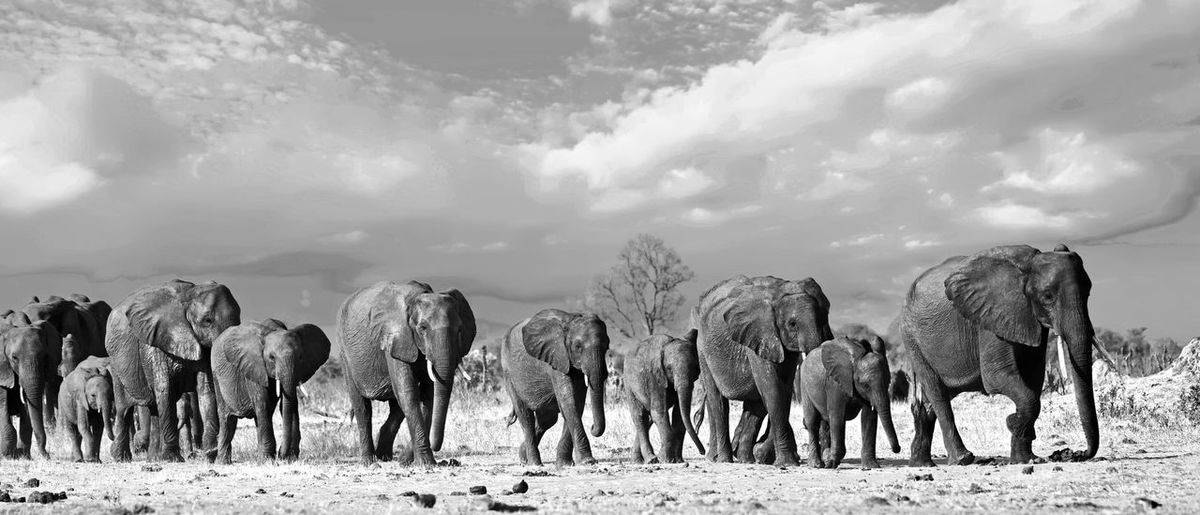 Animals In The Wild Animal Wildlife Safari Wildlife & Nature Hwange National Park Zimbabwe Southern Africa Travel Destinations Vacations Plains Savannah Outdoor Photography Mammal Wilderness Beauty In Nature Elephant Big Five Pachyderm Scenics - Nature