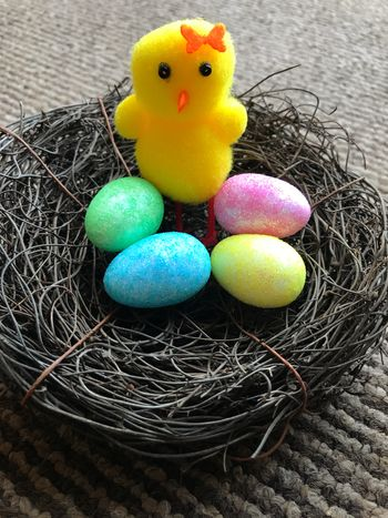 Easter chick with eggs in nest Holiday Chick Easter Easter Egg Egg Celebration Animal Representation Indoors  No People Bird Holiday - Event Springtime Close-up Multi Colored