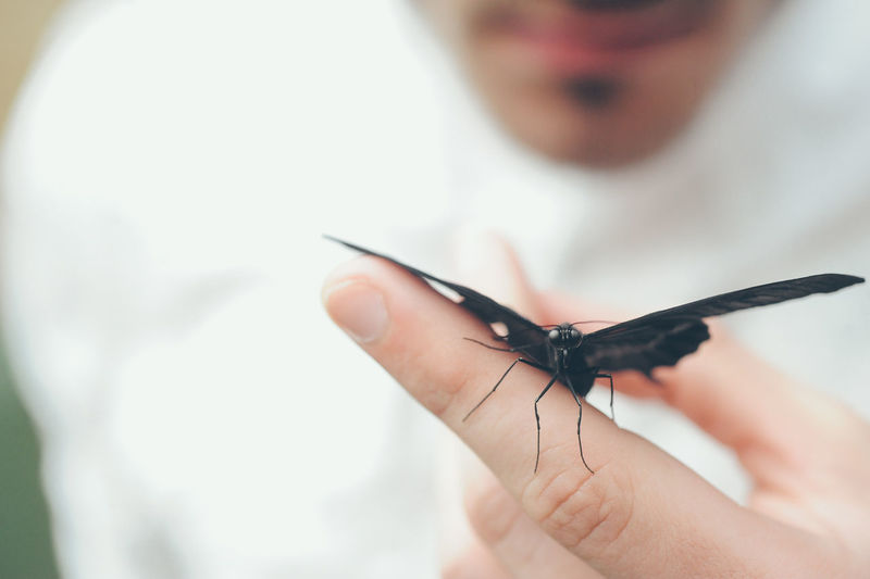 Cropped image of man holding black moth