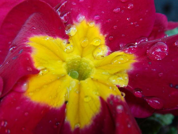 rainy day flower Bright Colors Close-up Colors Colorsplash Crisp Flower Flower Collection Flower Head Micro Nature Pink Pop Popular Photos Rain Raindrops Water Yellow The Traveler - 2018 EyeEm Awards