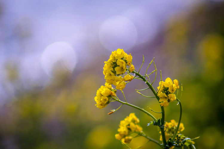 EyeEm Best Shots EyeEm Nature Lover EyeEmBestPics EyeEm Best Shots - Nature Wonders Of Nature Water Lakeside Springtime Oilseed Rape Flower Yellow Close-up Sky Plant In Bloom Pollen Botany Petal Blooming