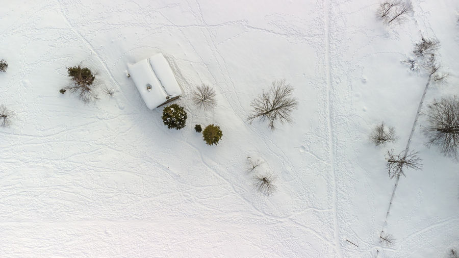 High angle view of snow covered plant on field