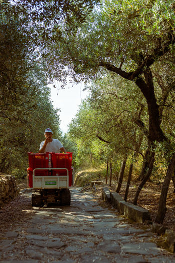 Man sitting on road amidst trees