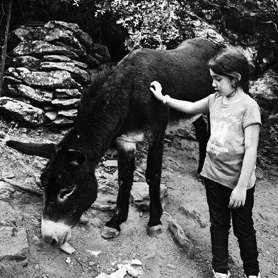 Pour toi mon cher Christophe @bluecost je crois me rappeller que tu aimes ces animaux comme moi et que ton rêve serait d en avoir un.. un peu A_la_maniere_de toi ;) .... il a une 20aine d année et il s appelle Murinu ..... belle journée a vous les maitresses de ce challenge @stefania131313 @mcg_1978 ♡ ... bonne journée a tous...