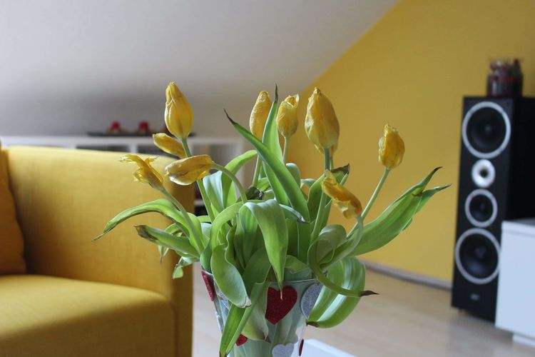 Close-up of flower vase by sofa at home