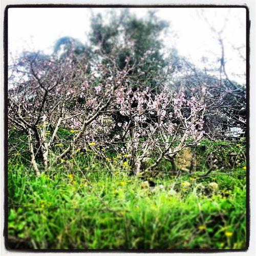 Spring Lebanon Tania  shbeniyeh