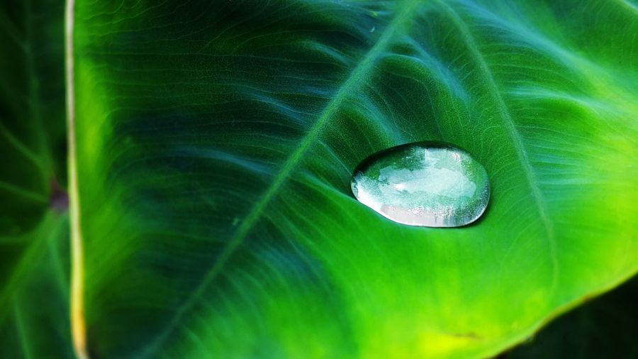#EyeEmReady Water Drops Nature Water On Leaf Grean Leafs