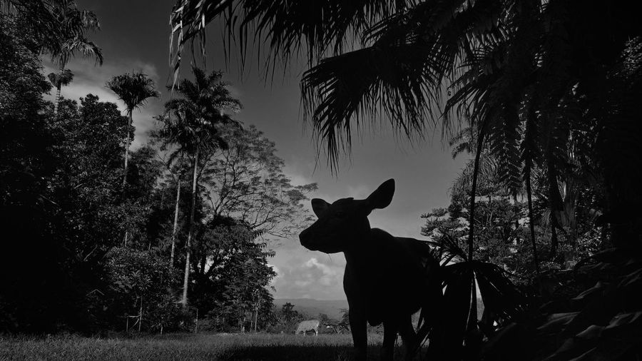 Low angle view of cow standing on grassy field amidst trees