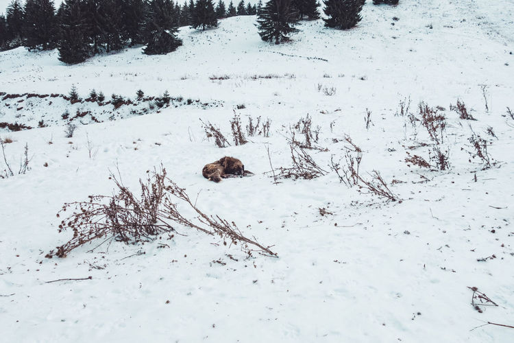 Dog sleeping near the slope Dog Sleeping Sleeping Dog Dog Sleeping  Snow Cold Temperature Winter Field Nature White Color No People Land Beauty In Nature Animal Themes Day Animal Plant Tranquility Animal Wildlife Animals In The Wild Outdoors Slope Winter Wintertime Dog Photography