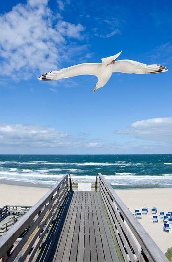 Seagull flying over beach against sea and sky