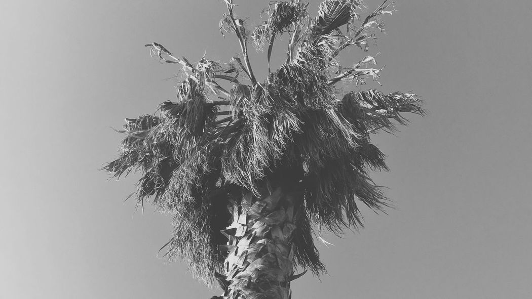 Clear Sky Low Angle View Tree Growth No People Nature Day Outdoors Branch Leaf Palm Tree Sky Beauty In Nature Close-up The Great Outdoors - 2017 EyeEm Awards Live For The Story EyEmNewHere