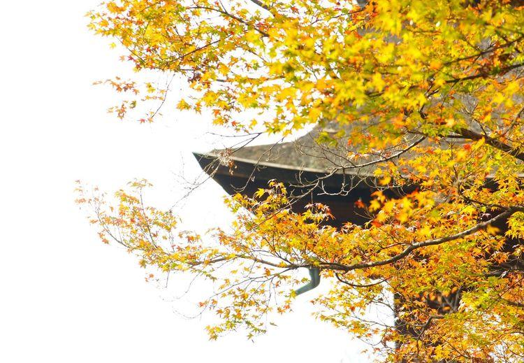 Kyoto*Japan 清水寺 京都 日本 Capture The Moment Kiyomizu-dera Japan Autumn Leaves KiyomizuTemple Fall Autumn Garden Kyoto