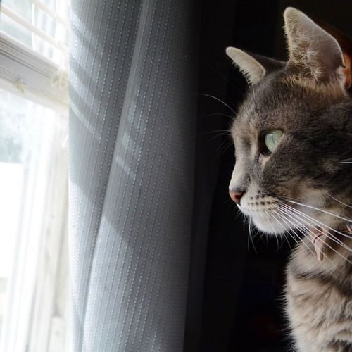 Close-up of cat looking out through window while sitting at home