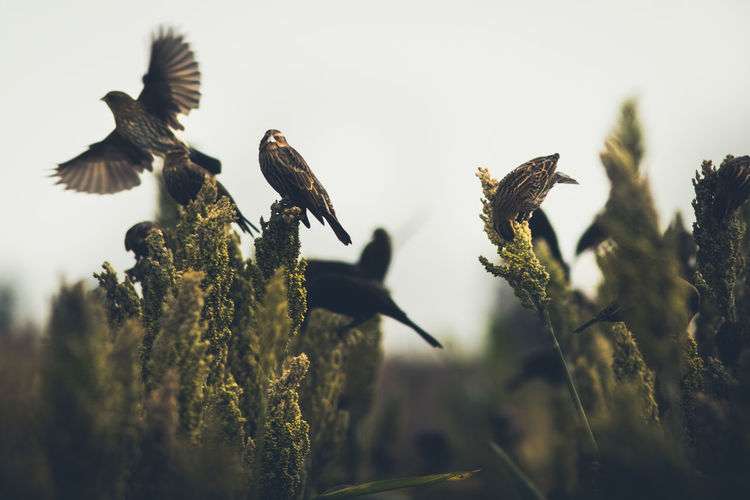 Animal Animal Themes Animal Wildlife Animals In The Wild Beauty In Nature Bird Clear Sky Close-up Day Flying Group Of Animals Growth Nature No People Outdoors Plant Selective Focus Sky Vertebrate