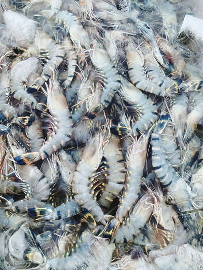 High angle view of shrimps for sale