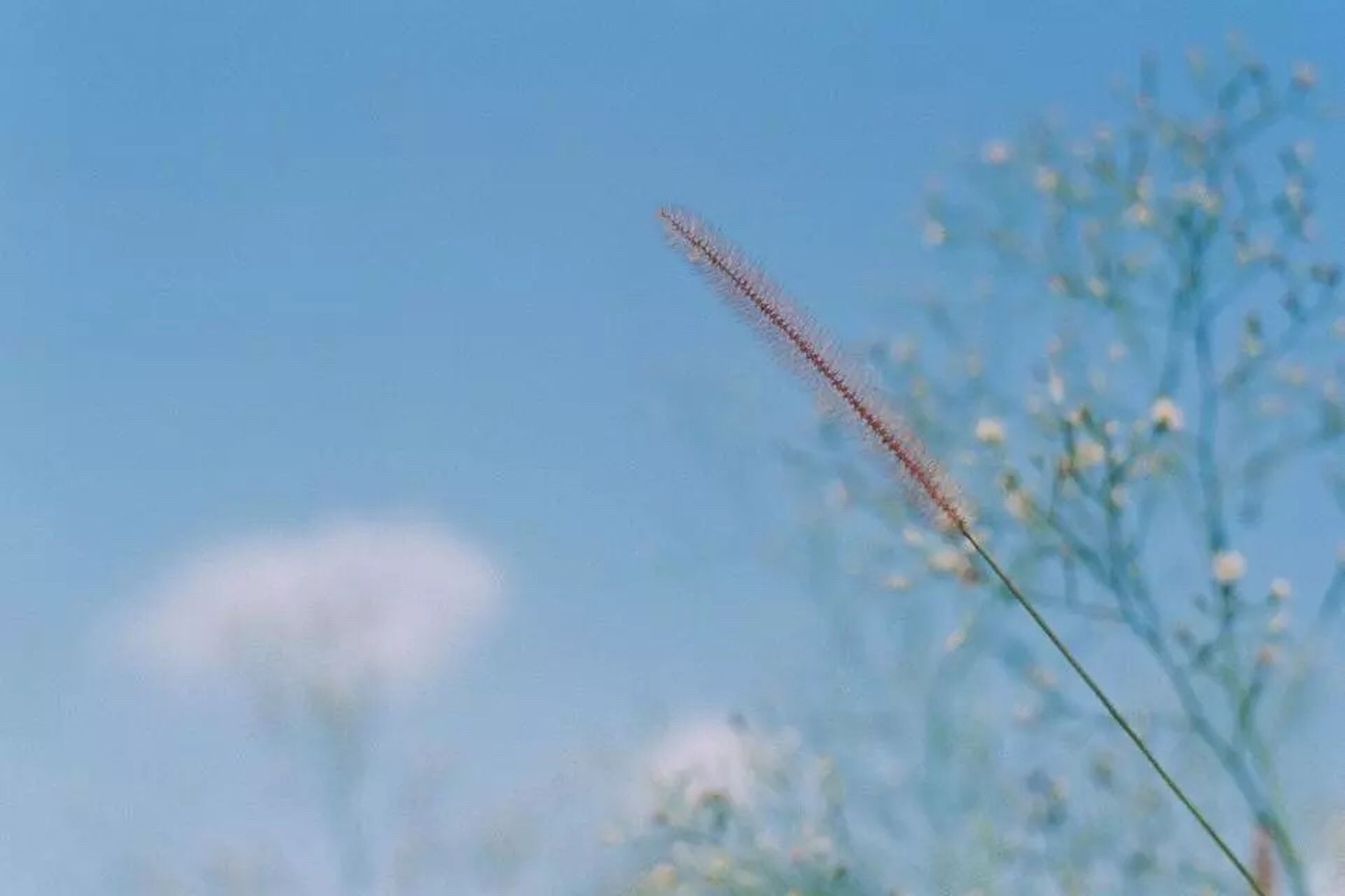 plant, nature, growth, focus on foreground, blue, close-up, selective focus, stem, day, beauty in nature, low angle view, sky, outdoors, field, tranquility, no people, twig, copy space, clear sky, fragility