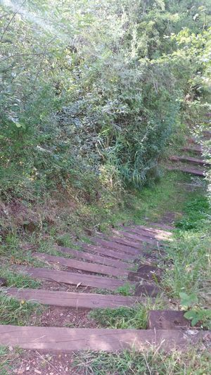 Nature Reserve Stairways Steps Nature