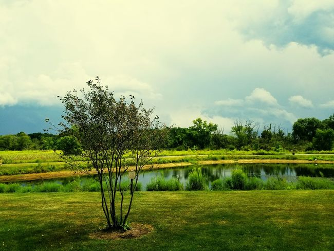 Tree cloud lake green Tree Cloud - Sky Outdoors Nature No People Water Sky Day Lake Growth Beauty In Nature Scenics