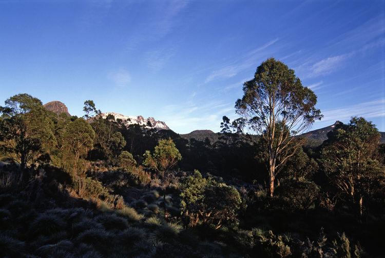 gum trees and mount ossa, tasmania Australia Footpath Gum Trees Hike Mount Ossa Outdoors Overland Track Scenics Tasmania Tassie The Overland Track Tranquil Scene Walk Walkway