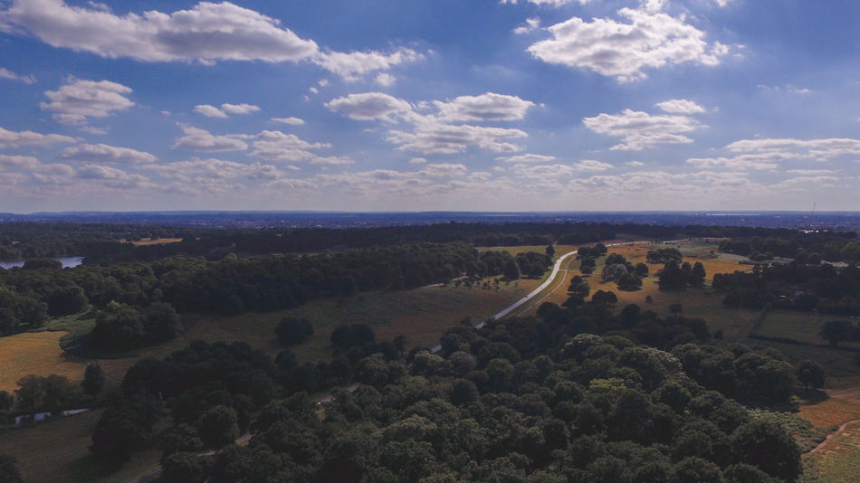 Aerial Richmond Park Aerial Aerial Photography Aerial Shot Aerial View Landscape Park Richmond Richmond Park, London Trees And Sky