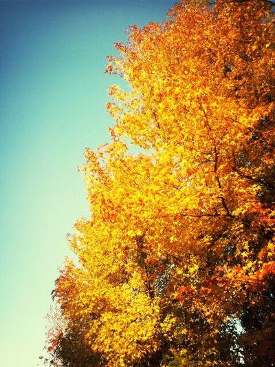 EyeEm Nature Lover Autumn Tree