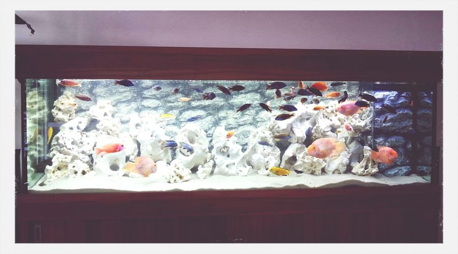 Tatínkovy krásné rybičky.