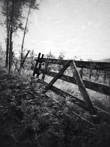 This ol' Fence The Path Less Traveled By Pointer Footwear