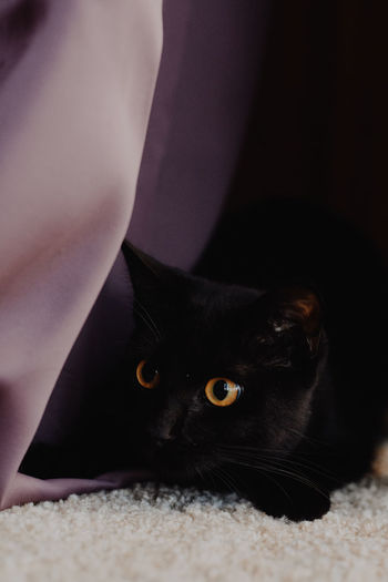 Sookie was being so playful this morning! Black Cat Cat Day Domestic Animals Domestic Cat Feline Indoors  Kitten Lying Down Mammal One Animal Orange Eyes Pets Playful Wide Eyed Wide Eyes Yellow Eyes