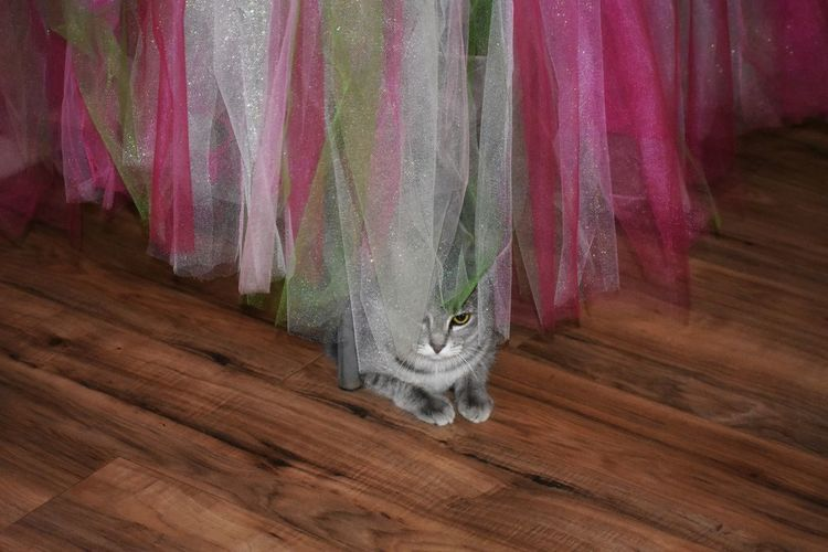 kitty Ineffable Life Photography And Art B&WvsColor Colors Netting Material Curtain Close-up Domestic Cat Whisker Fabric Persian Cat  Feline Cat Domestic Animals Pets Kitten