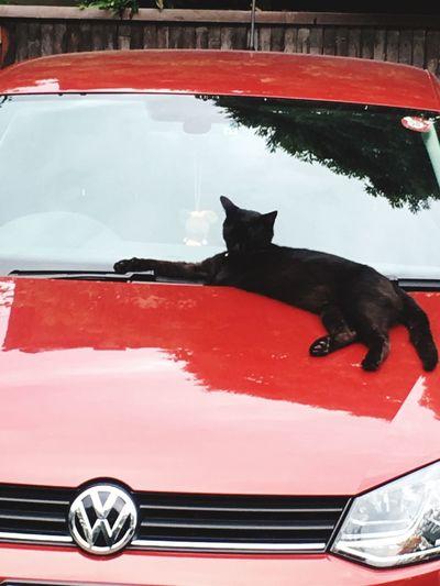 くつろぐ猫 Cat Car Red Color 黒猫 Gunma Japan Takasaki