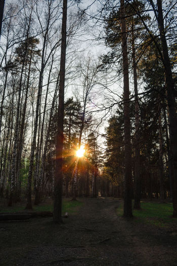 Sunlight streaming through trees in forest during sunset