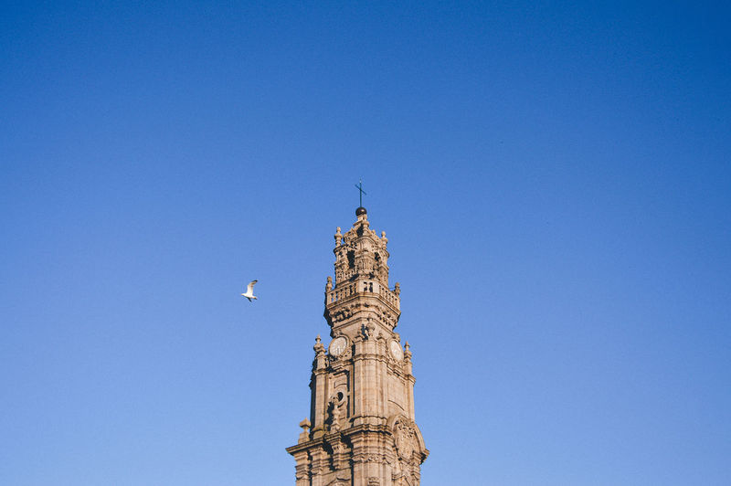 Low angle view of bird flying by clerigos church tower against sky