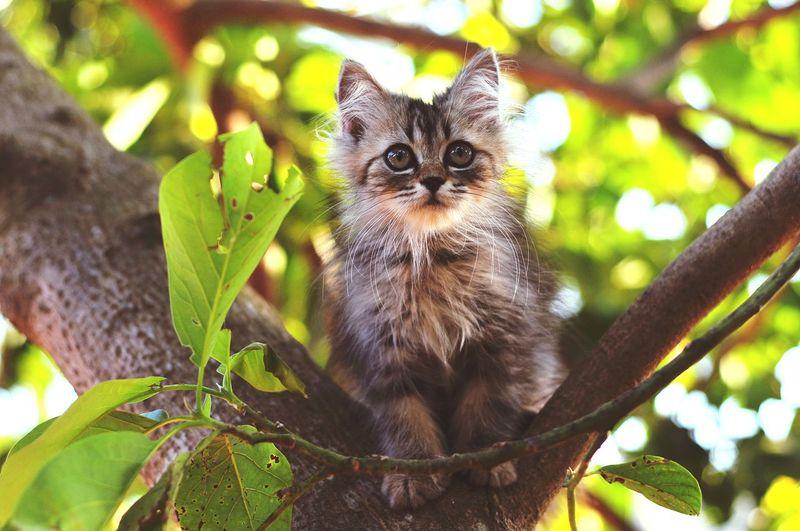Kitten 🐱 Cat Lovers Cats Of EyeEm Cats 🐱 Tree Portrait Looking At Camera Leaf Pets Cute Ear Animal Themes Close-up Kitten Persian Cat  Feline Cat Animal Eye Carnivora Whisker