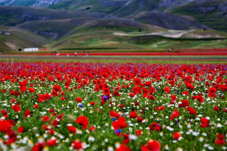 Red flowers growing on field