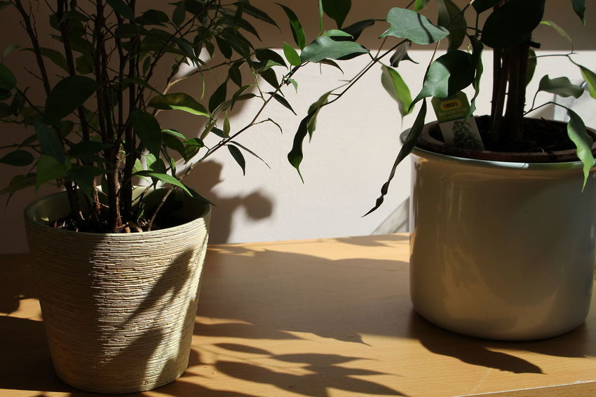 Close-up Indoors  Leaf Nature No People Plant Shadow And Light Sunday Vibes Table EyeEm New Here