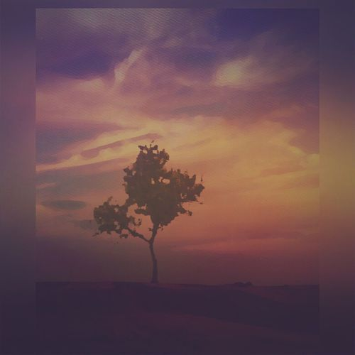 Tree Sunset Nature Lone Beauty In Nature Sky Scenics Tranquil Scene Tranquility Isolated Cloud - Sky Landscape Outdoors No People Day